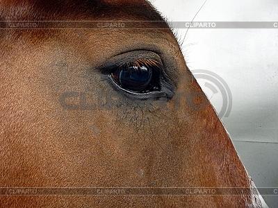 Auge des braunes Pferds | Foto mit hoher Auflösung |ID 3011002