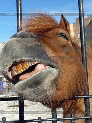 Pferd lächelt | Foto mit hoher Auflösung |ID 3011003
