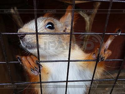 Wiewiórka w klatce | Foto stockowe wysokiej rozdzielczości |ID 3011022