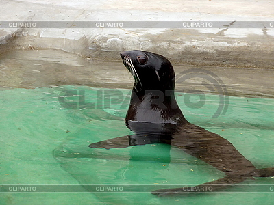 Seebär | Foto mit hoher Auflösung |ID 3011060