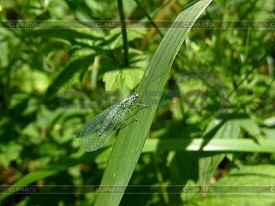 Insekt auf Gras | Foto mit hoher Auflösung |ID 3011856