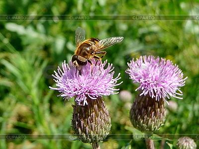 Orange Fliege auf Blume | Foto mit hoher Auflösung |ID 3011873