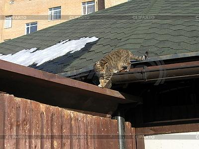 Katze auf Dach | Foto mit hoher Auflösung |ID 3011928