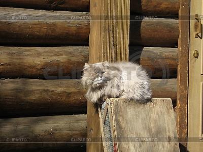 Rural cat | Foto stockowe wysokiej rozdzielczości |ID 3011998