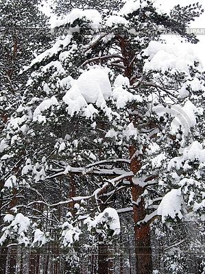 Winterwald | Foto mit hoher Auflösung |ID 3012042