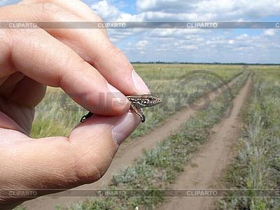 Eidechse im Hand | Foto mit hoher Auflösung |ID 3012162