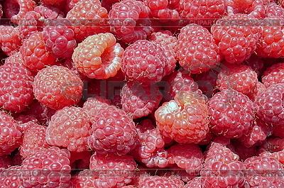 Świeże czerwone maliny | Foto stockowe wysokiej rozdzielczości |ID 3012217