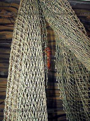 Kakerlak auf Fischernetz | Foto mit hoher Auflösung |ID 3012491