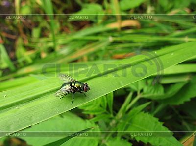Fliege | Foto mit hoher Auflösung |ID 3012512