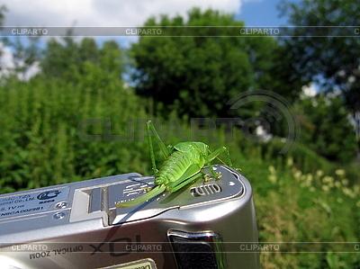 Zielony konik polny na kamery | Foto stockowe wysokiej rozdzielczości |ID 3012516