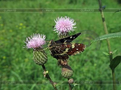 Motley motyl na kwiat | Foto stockowe wysokiej rozdzielczości |ID 3012548