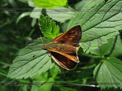 Mały czerwony motyl na liściu | Foto stockowe wysokiej rozdzielczości |ID 3012596