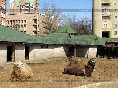 Zwei Kamele | Foto mit hoher Auflösung |ID 3012620