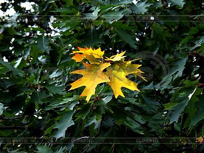 Pierwsze żółte jesienne liście | Foto stockowe wysokiej rozdzielczości |ID 3039627