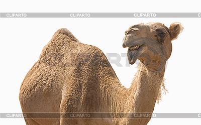 Camel Toe Porno-Bilder, XXX Bilder, Sex Bilder -