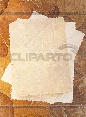 Retro Hintergrund mit Herbarium und altes Foto | Foto mit hoher Auflösung |ID 3014739