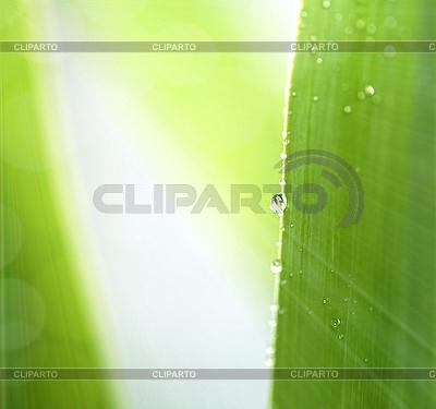 Wiosna liści z kropli wody | Foto stockowe wysokiej rozdzielczości |ID 3016542