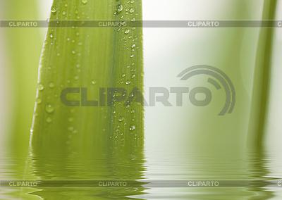 Wassertropfen auf Blatt | Foto mit hoher Auflösung |ID 3018150