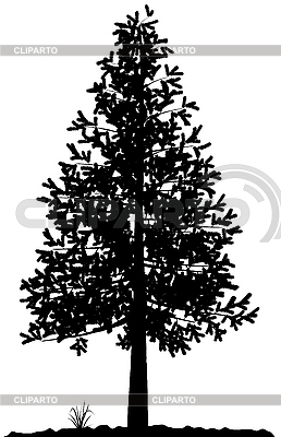 Drzewo sylwetka | Klipart wektorowy |ID 3013588
