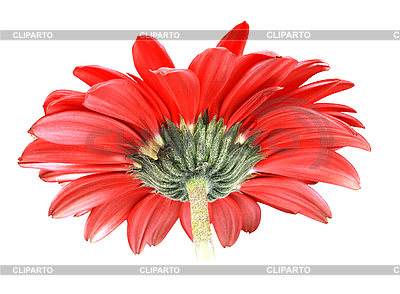 Rote Blume | Foto mit hoher Auflösung |ID 3032978