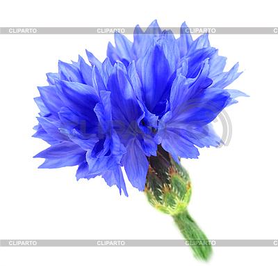 Цветы из атласных лент своими руками заколках