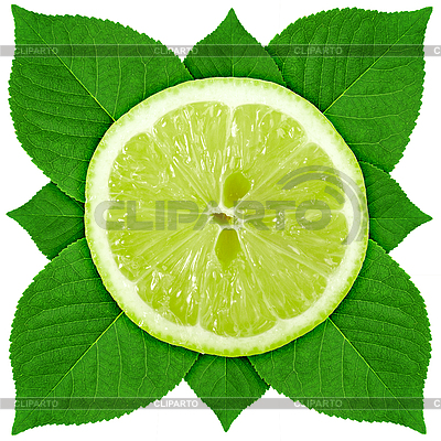 Limette mit grünen Blättern | Foto mit hoher Auflösung |ID 3033068