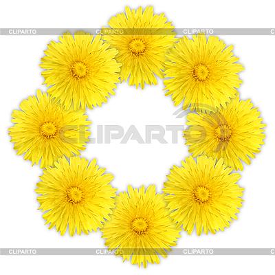 Rahmen als Ring aus gelben Blumen | Foto mit hoher Auflösung |ID 3033158
