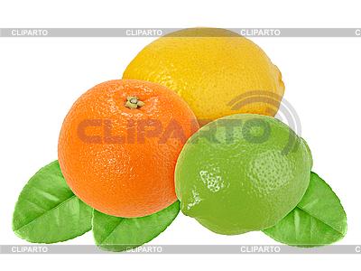 Orange, Zitrone und Limette auf grünen Blatt | Foto mit hoher Auflösung |ID 3033211