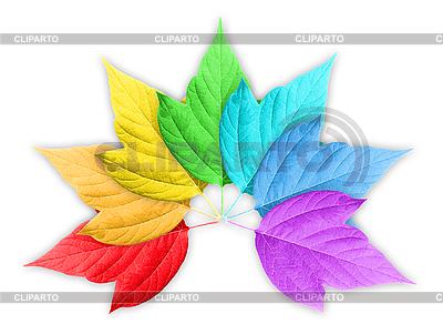 Bunte Blätter | Foto mit hoher Auflösung |ID 3033244