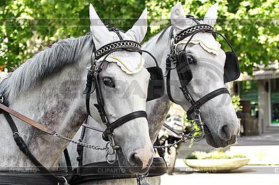 Konie w zaprzęgu na ulicy miasta | Foto stockowe wysokiej rozdzielczości |ID 3012855