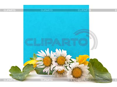 Niebieskie miejsca dla tekstu ze świeżych kwiatów | Foto stockowe wysokiej rozdzielczości |ID 3013762