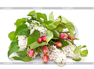 Strauß von rosa Tulpen | Foto mit hoher Auflösung |ID 3013974