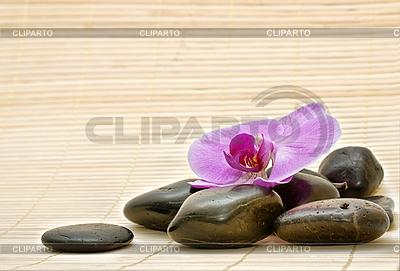Rosa Orchidee und Zen-Steine | Foto mit hoher Auflösung |ID 3014404
