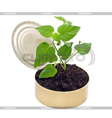 Junge Pflanze im Boden | Foto mit hoher Auflösung |ID 3014411
