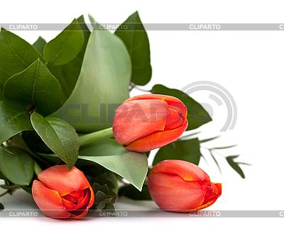Bukiet tulipanów na białym tle | Foto stockowe wysokiej rozdzielczości |ID 3014582