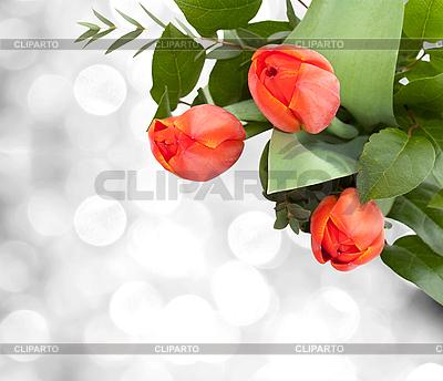 Bukiet tulipanów | Foto stockowe wysokiej rozdzielczości |ID 3014589