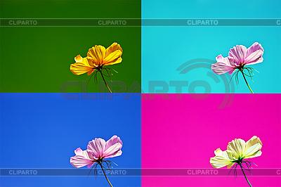 Pocztówki w czterech różnych kolorach, z delikatnym kwiatem. | Foto stockowe wysokiej rozdzielczości |ID 3014650