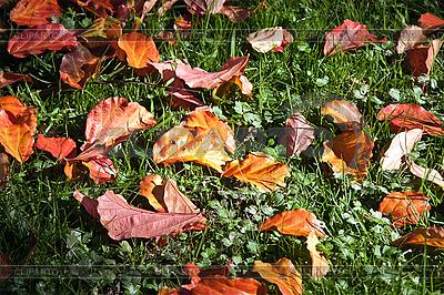 Jesienne liście na zielonej trawie w wiązki promieni słonecznych. | Foto stockowe wysokiej rozdzielczości |ID 3018913