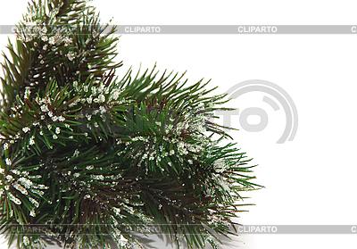 Fichte-Zweige im Schnee | Foto mit hoher Auflösung |ID 3018932