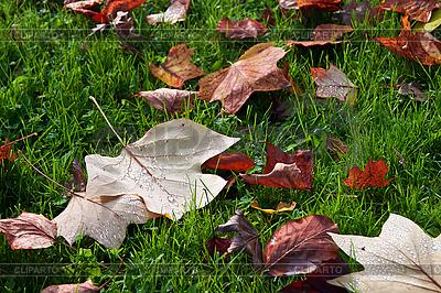Jesienne liście | Foto stockowe wysokiej rozdzielczości |ID 3019078