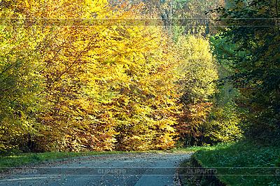 Дорога в осеннем лесу | Фото большого размера |ID 3019087