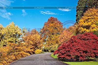 Straße im Herbst-Wald. | Foto mit hoher Auflösung |ID 3019104