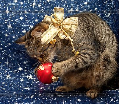 Кошка играет с елочным шаром | Фото большого размера |ID 3019119