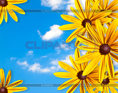 Ramka żółte kwiaty na tle błękitnego nieba | Foto stockowe wysokiej rozdzielczości |ID 3019313
