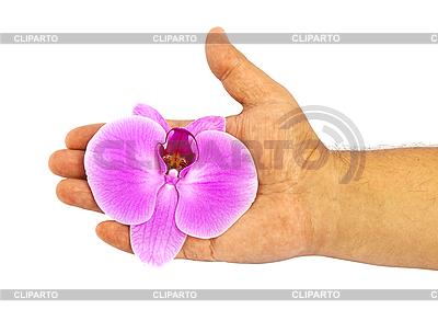 Orchid in der Hand | Foto mit hoher Auflösung |ID 3024380