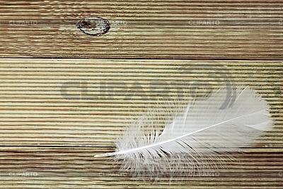 Weiße Feder auf dem Brett | Foto mit hoher Auflösung |ID 3037767