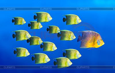 Führung Konzept mit Fische | Foto mit hoher Auflösung |ID 3015434