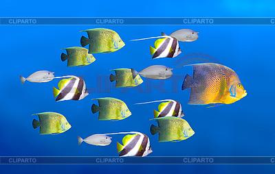 Führung Konzept mit Fische | Foto mit hoher Auflösung |ID 3015435