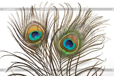 Pawie pióro | Foto stockowe wysokiej rozdzielczości |ID 3015594