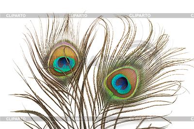 Dwa pawie pióra | Foto stockowe wysokiej rozdzielczości |ID 3015595